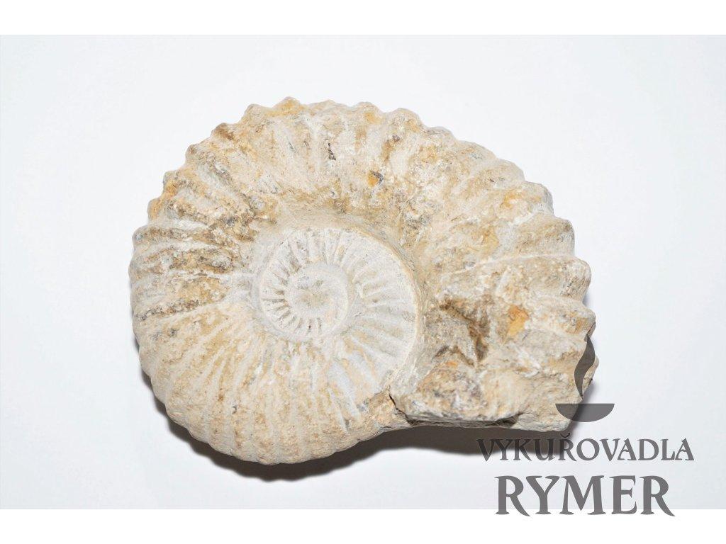 fosilní fosilní amonit kontakt stačí připojit
